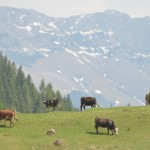 Ökotourismus in Moieciu de Sus